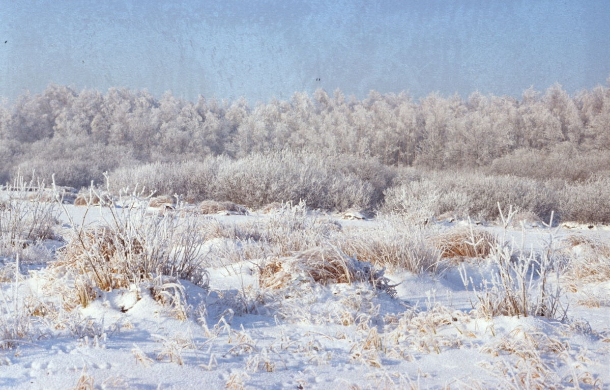 Stapelfelder Moor im Winter